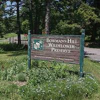 Bowmans Hill Wildflower Preserve