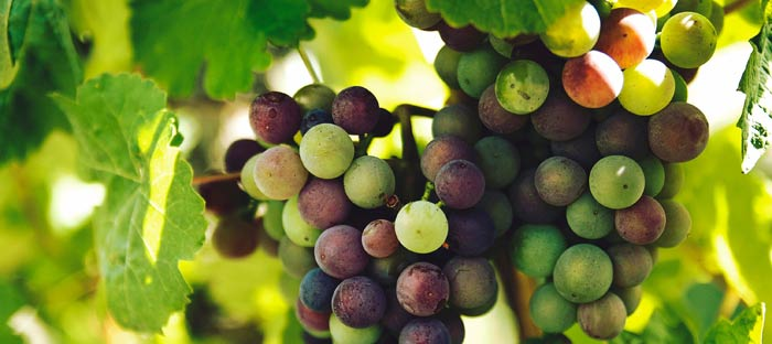 Visit a Winery and Vineyard in Chalfont, Bucks County, PA