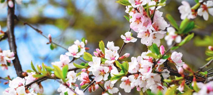 Spring is a wonderful time to enjoy shopping, dining, and the wonderful sights in Chalfont, Bucks County PA